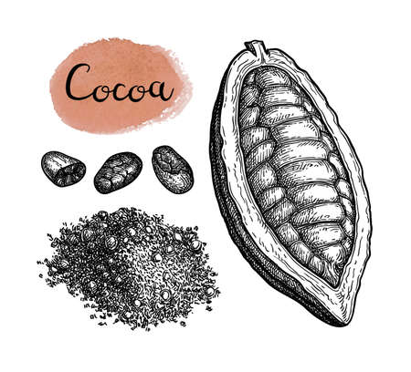 Cocoa and chocolate set. Ink sketch isolated on white background. Hand drawn vector illustration. Retro style. Ilustração