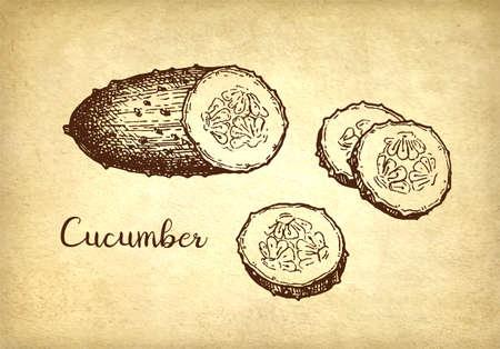 Ink sketch of cucumber. Imagens - 124889351
