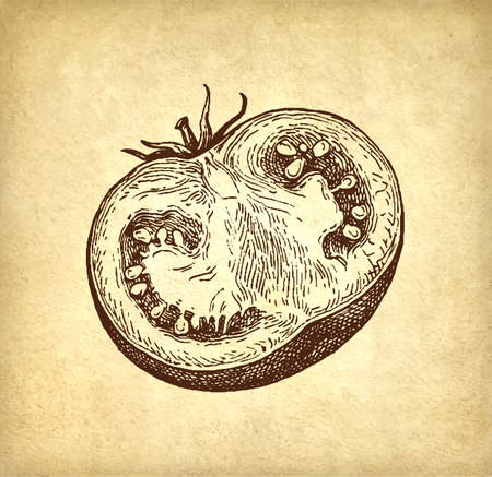 Ink sketch of tomatoes on old paper background. Hand drawn vector illustration. Retro style.