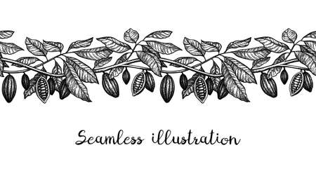 Seamless illustration of cocoa. Branches and pods. Ink sketch isolated on white background. Hand drawn vector illustration. Retro style. Ilustrace