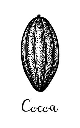Cocoa pod. Ink sketch isolated on white background. Hand drawn vector illustration. Retro style.