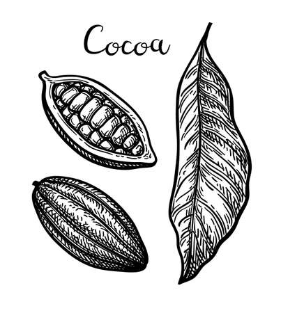 Cocoa set. Ink sketch isolated on white background. Hand drawn vector illustration. Retro style.