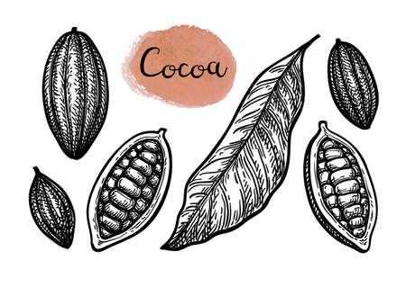 Cocoa set. Ink sketch isolated on white background. Hand drawn vector illustration. Retro style. Archivio Fotografico - 124378609