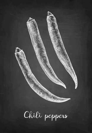 Chalk sketch of chile peppers on blackboard background. Hand drawn vector illustration. Retro style