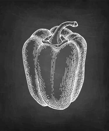 Chalk sketch of bell pepper on blackboard background. Hand drawn vector illustration. Retro style.