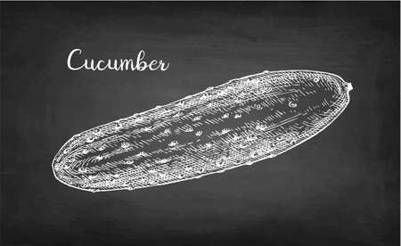 Chalk sketch of cucumber on blackboard background. Hand drawn vector illustration. Retro style.