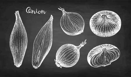 Chalk sketch of onion Çizim