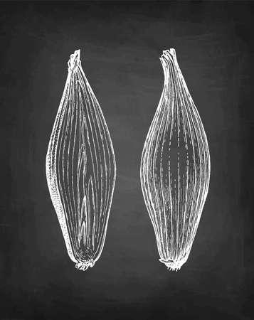 Chalk sketch of onion  イラスト・ベクター素材