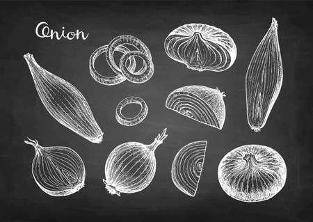 Chalk sketch of onion on blackboard background. Hand drawn vector illustration. Retro style.