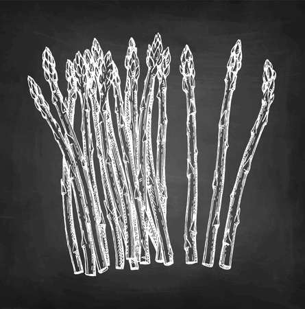 Chalk sketch of asparagus on blackboard background. Hand drawn vector illustration. Retro style. Ilustração