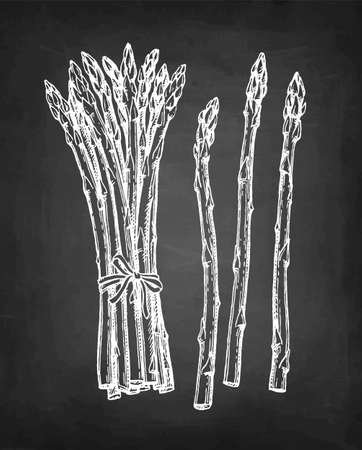 Chalk sketch of asparagus on blackboard background. Hand drawn vector illustration. Retro style.