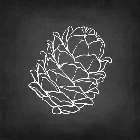 Chalk sketch of pine nut