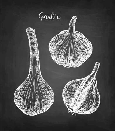 Chalk sketch of garlic