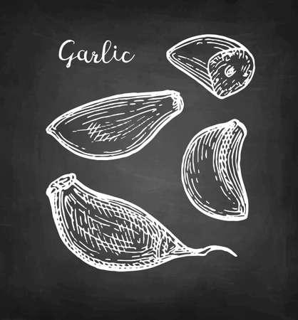 Chalk sketch of garlic
