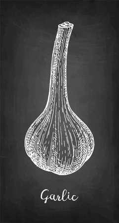 Chalk sketch of garlic on blackboard background. Hand drawn vector illustration. Retro style.