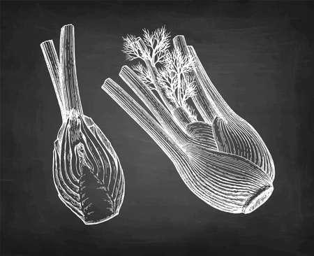 Chalk sketch of fennel bulbs  イラスト・ベクター素材