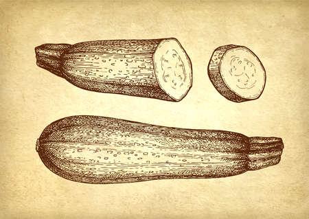 Ink sketch of zucchini.