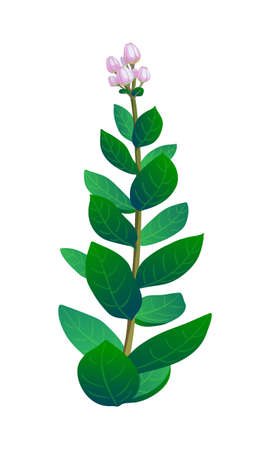 Vector illustration of indian plant.