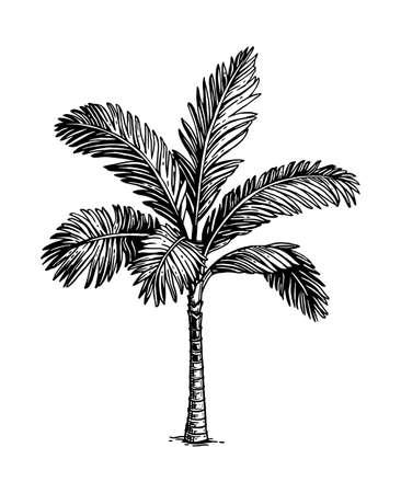 Dibujo tinta de palmera. Ilustración de vector