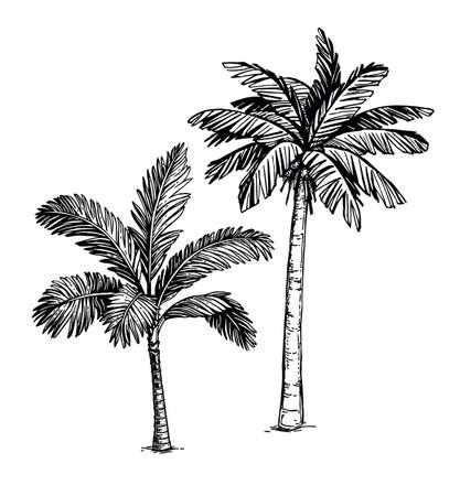 Ink sketch of palm trees. 向量圖像