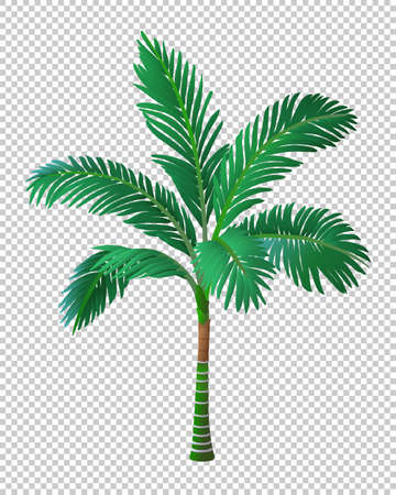 Vector illustration of palm tree.