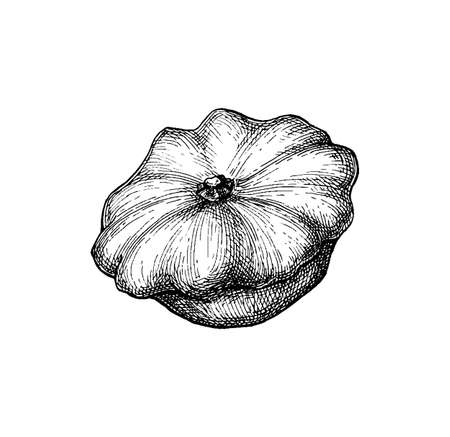 Ink sketch of pattypan squash isolated on white background. Hand drawn vector illustration. Retro style.
