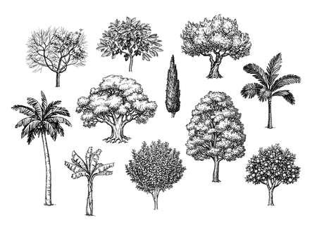 Croquis à l'encre d'arbres.