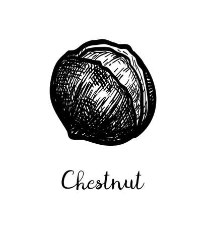 Roasted chestnuts. Ink sketch isolated on white background. Hand drawn vector illustration. Retro style.