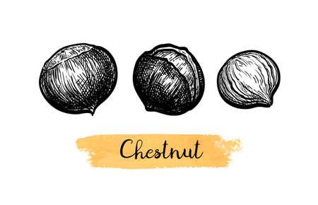 Ink sketch of chestnuts.