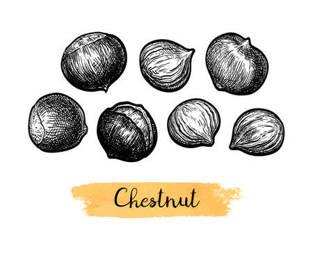 Ink sketch of chestnuts.