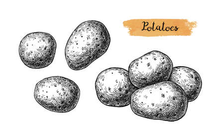 Ink sketch of potatoes.  イラスト・ベクター素材