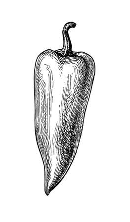 Ink sketch of long bell pepper. Ilustracja