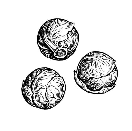 Ink sketch of brussels sprout.