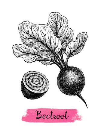 Ink sketch of beetroot. Illusztráció