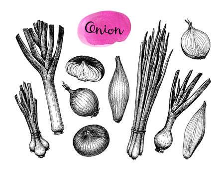 Onions, leeks and scallions.