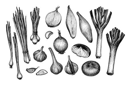 Big set. Onions, garlic, leeks and scallions. Ink sketch isolated on white background. Hand drawn vector illustration. Retro style.