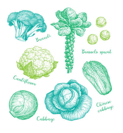 Big collection of cabbage.