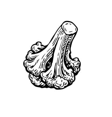 Ink sketch of cauliflower.