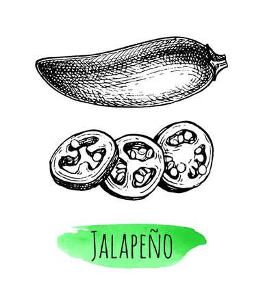 Ink sketch of jalapeno Ilustração