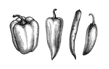 Ink sketch of peppers