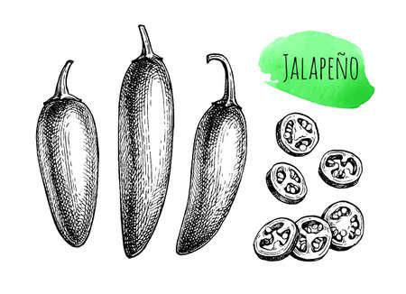 Ink sketch of jalape o