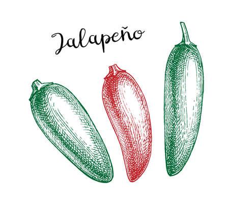 Ink sketch of jalapeno Illusztráció