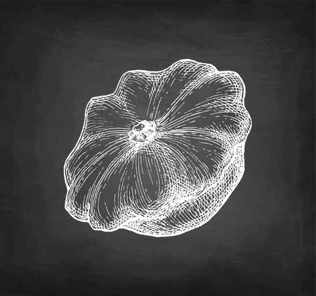 Chalk sketch of pattypan squash. 矢量图像