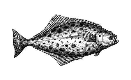 Ink sketch of halibut.