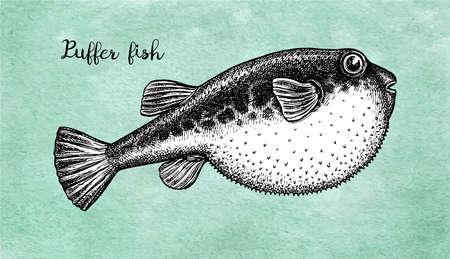 Ink sketch of fugu fish.