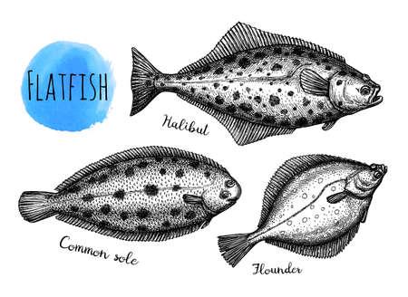 Ink sketch of flatfish Çizim