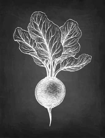 Chalk sketch of beetroot. Çizim