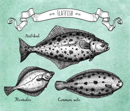 Ink sketch of flatfish Vetores