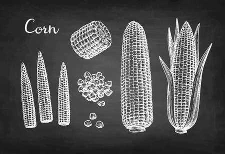 Chalk sketch set of corn. Illustration
