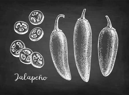 Ink sketch of jalapeno Illustration